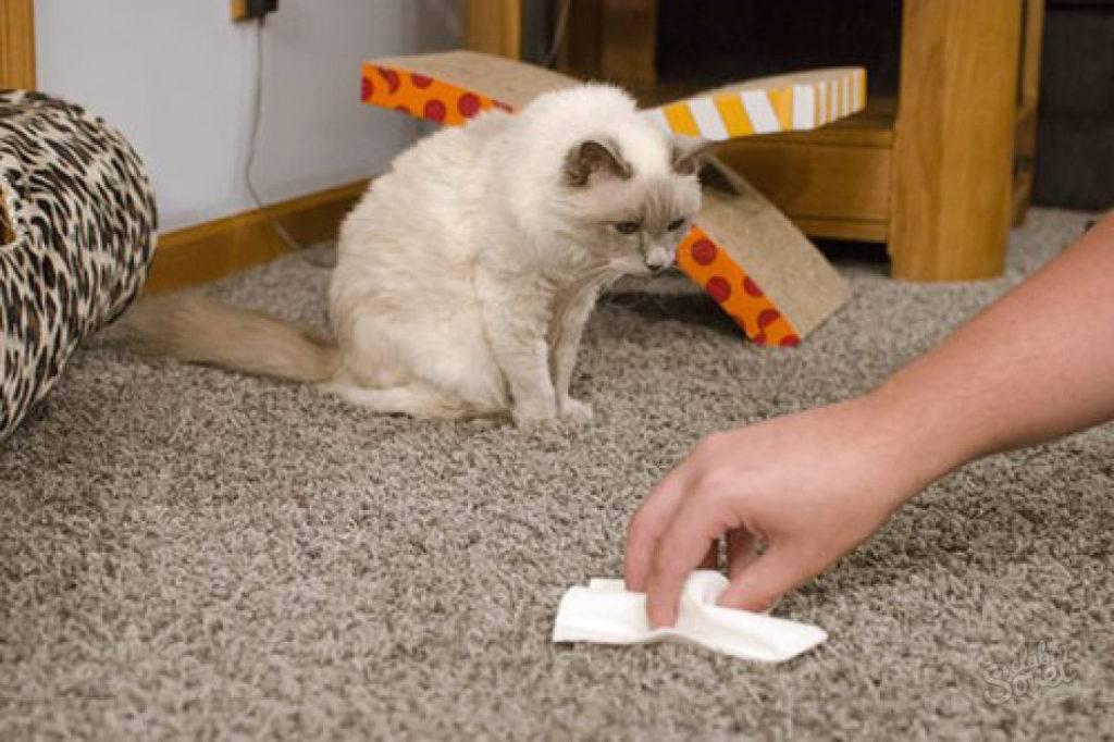 Лучшие средства уборки собачьей мочи с ковров