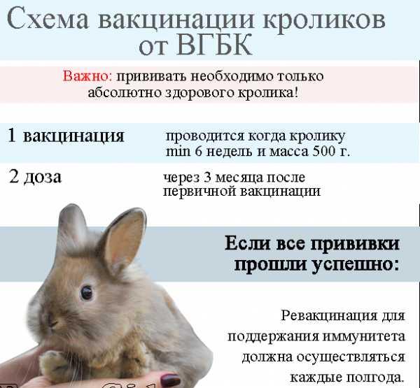 Геморрагическая болезнь кроликов: симптомы, лечение, фото