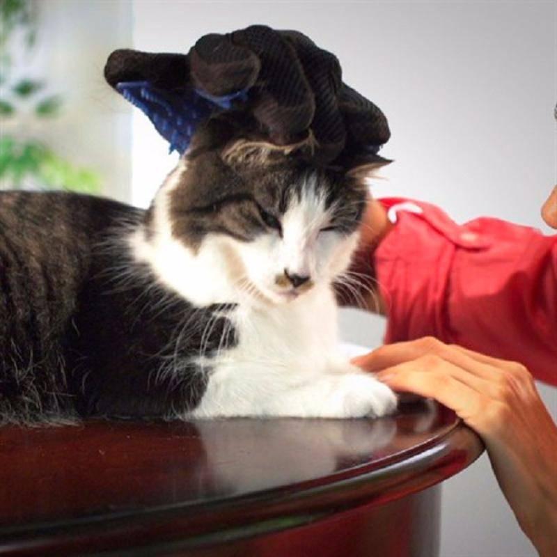 Фурминатор для кошек: что это такое, как правильно использовать, особенности расчески, отзывы владельцев домашних животных, видео