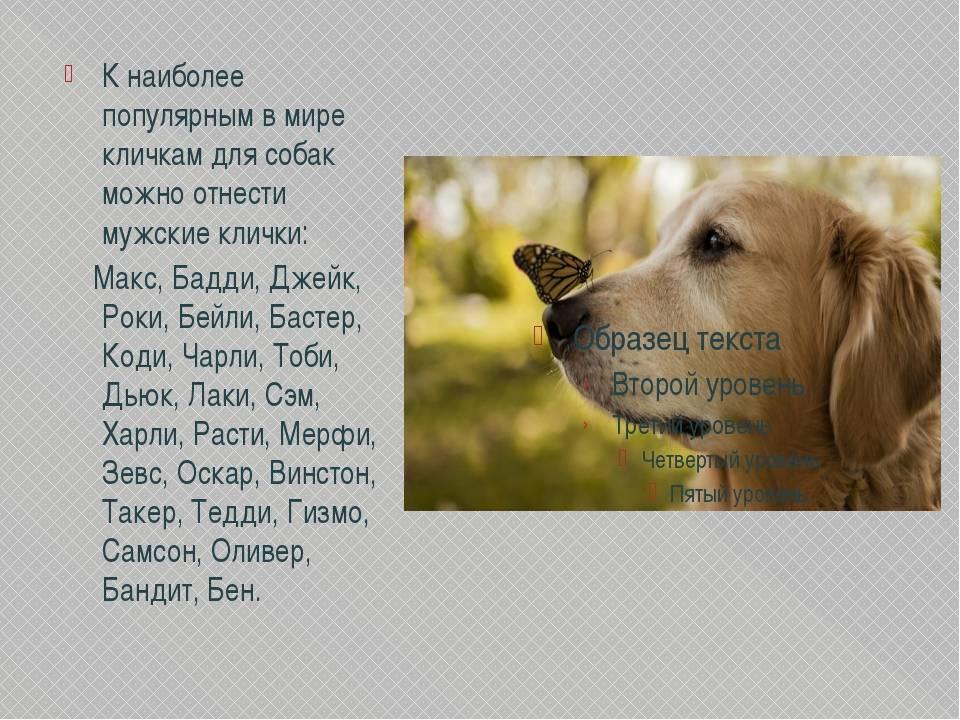 Смешные клички для собак, интересные и забавные имена для мальчиков и девочек.