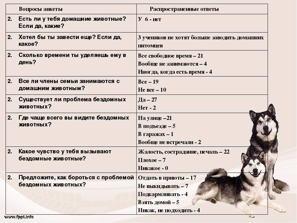 Топ-15 лучших пород для квартиры: какую собаку завести в квартире