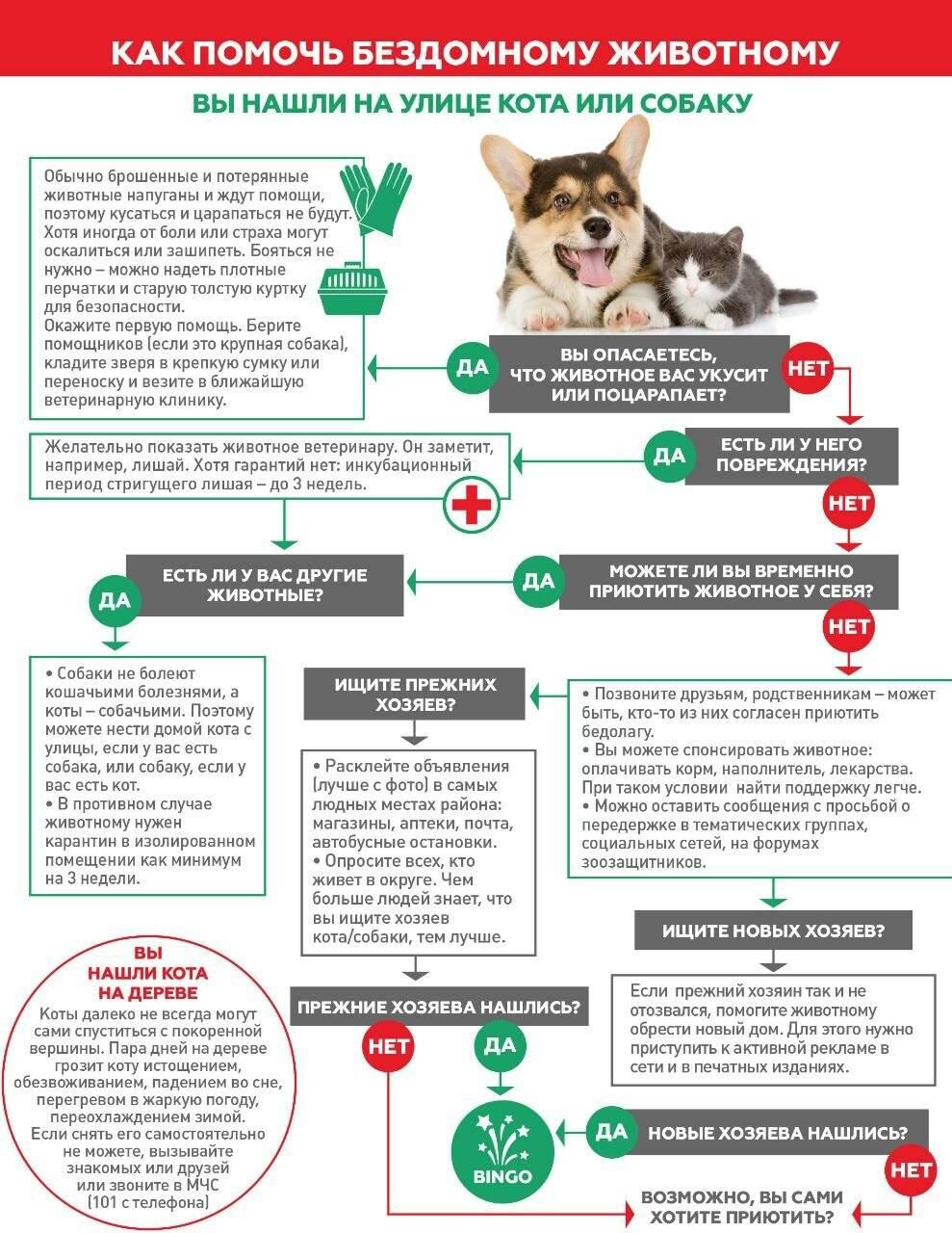 Я смогу: как пристроить бездомных щенят?  • наш университет_онлайн