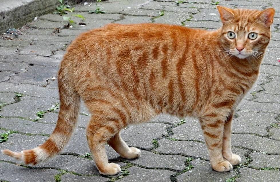 Ожирение у кошек и котов: признаки, лечение и диета. ожирение у кошек: причины, симптомы, диета и профилактика