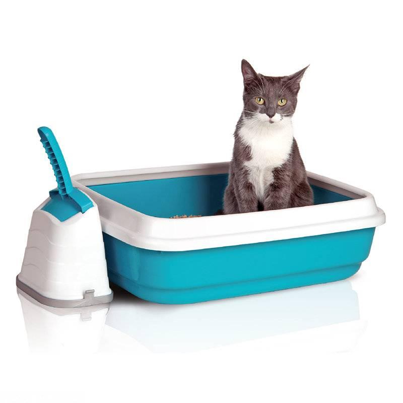 Как приучить взрослого кота и кошку к лотку | быстро, бездомных, уличных
