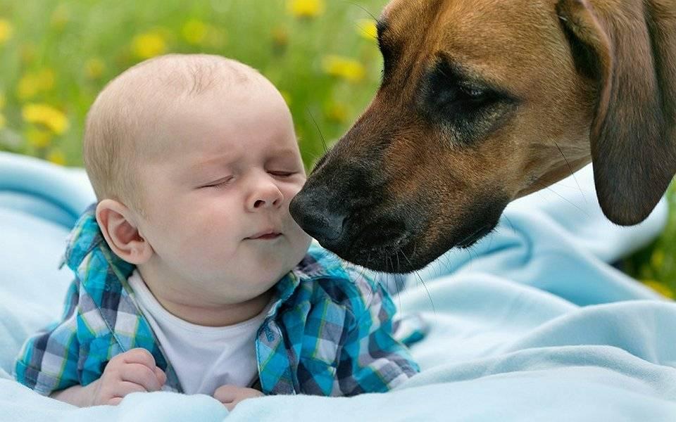 10 пород собак для ленивых хозяев