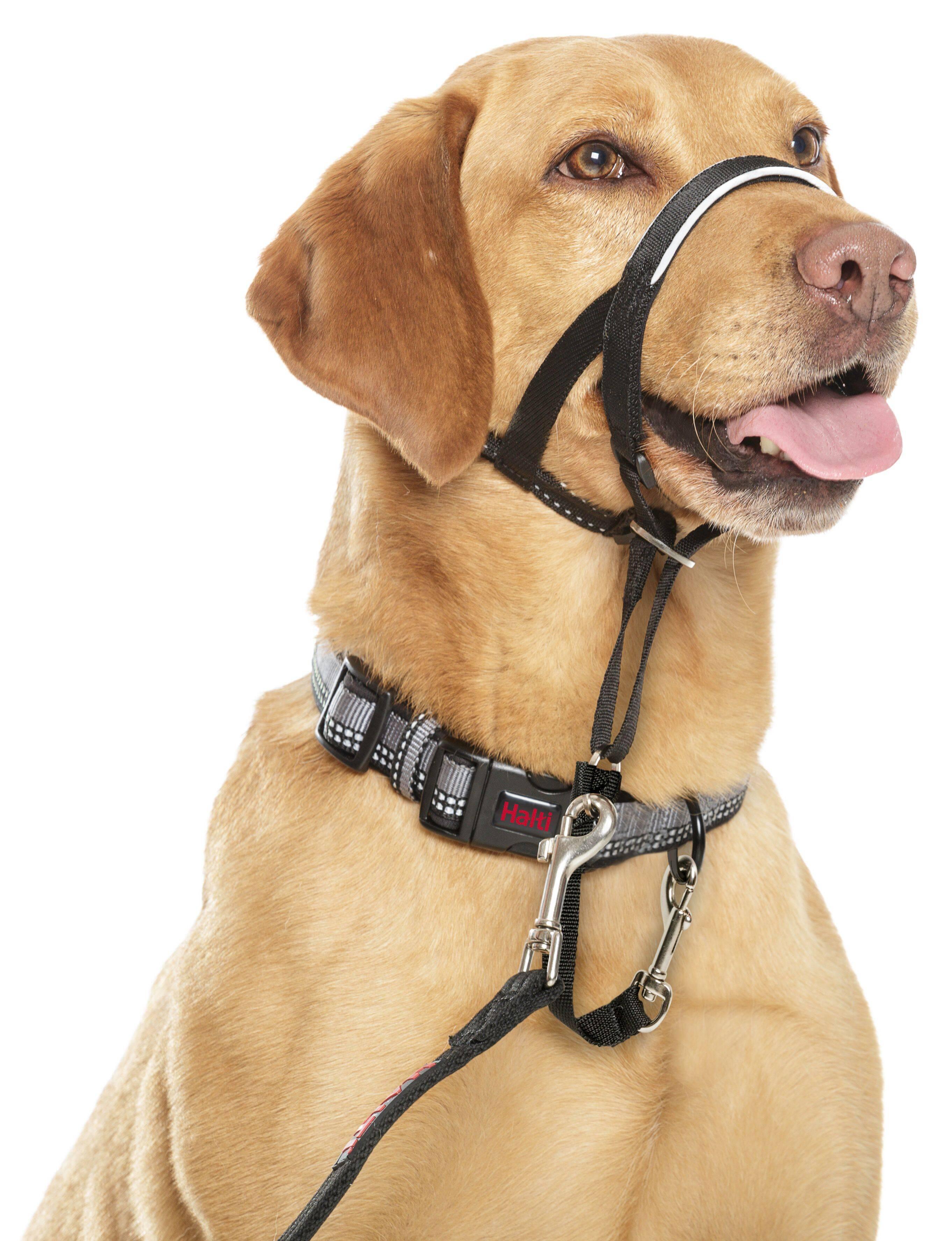 Недоуздок халти для собак – гуманная альтернатива ошейнику