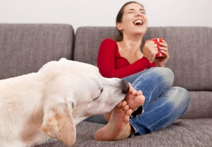 Как видит мир собака - и что означают собачьи поцелуи