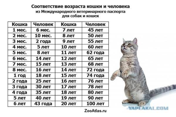 Когда кот становится старым – возраст питомца и 4 признака, говорящих о старении