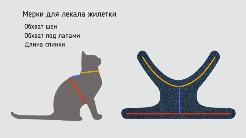 Шлейка для кошки или ошейник: что выбрать и как надеть