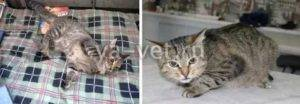 Эпилепсия у кошек: как прекратить приступы   симптомы, лечение, препараты
