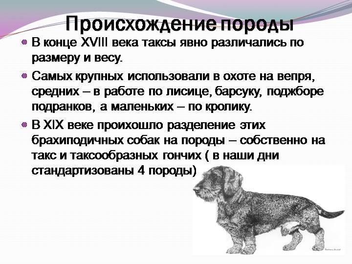 Самая первая собака в мире