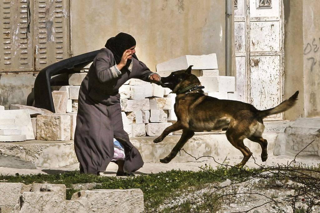 Почему в исламе собака считается нечистым животным: можно ли ее трогать