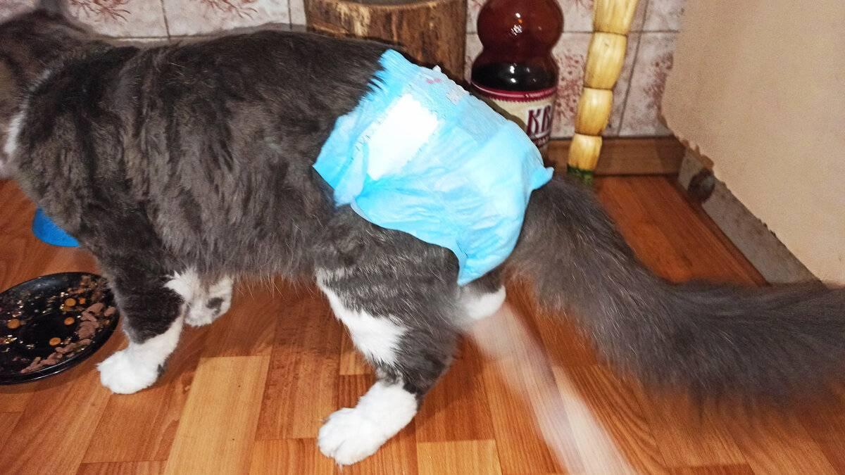 Одежда для кошек своими руками