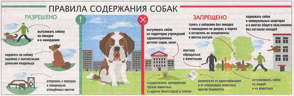 Какой штраф за выгул собаки без намордника и поводка в 2019 году