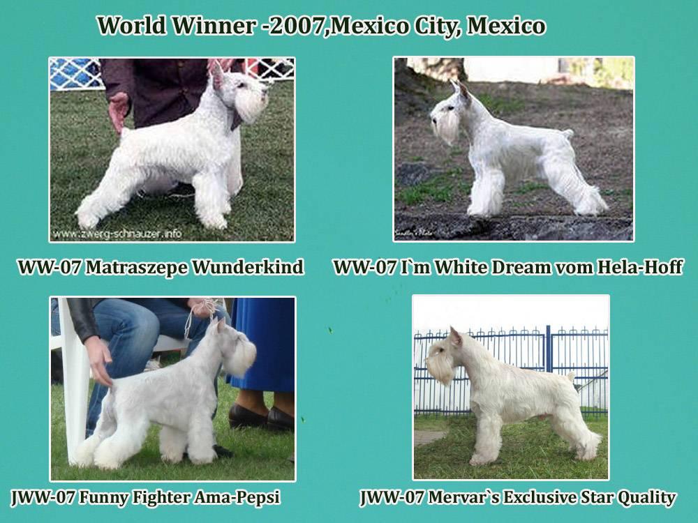 Большая белая собака: название породы