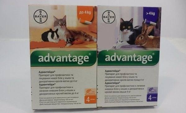 Капли на холку адвантейдж (advantage, имидаклоприд) – инструкция по применению для собак и кошек