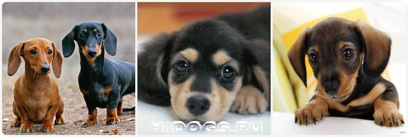 Как назвать щенка девочку * имена и клички для собаки