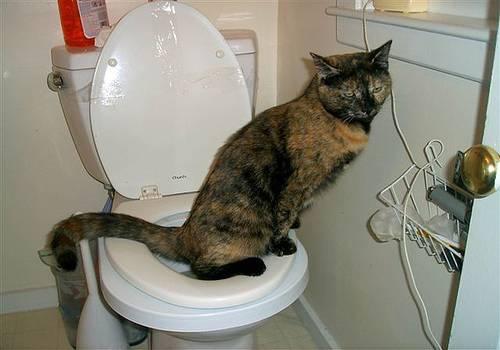 Кот часто ходит в туалет по-маленькому совсем по чуть-чуть