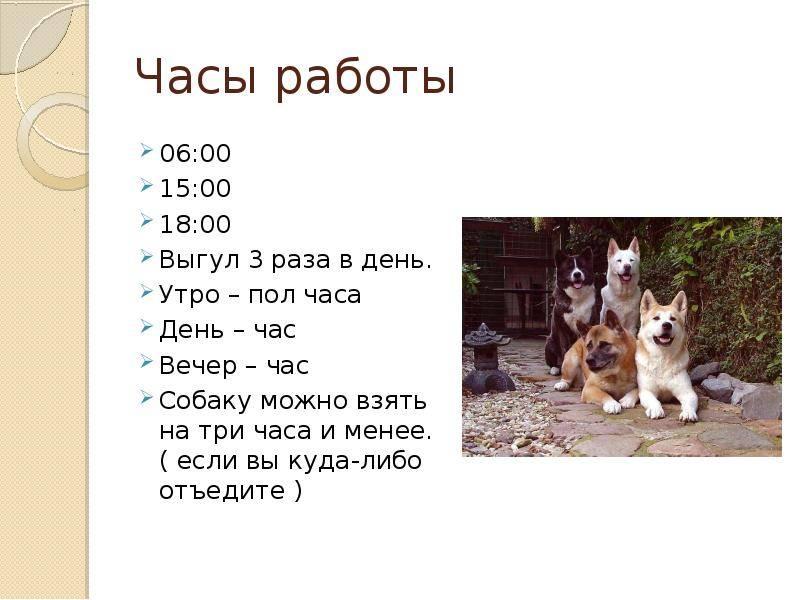 Карантин после прививки от бешенства у собак: через сколько дней после вакцинации можно гулять