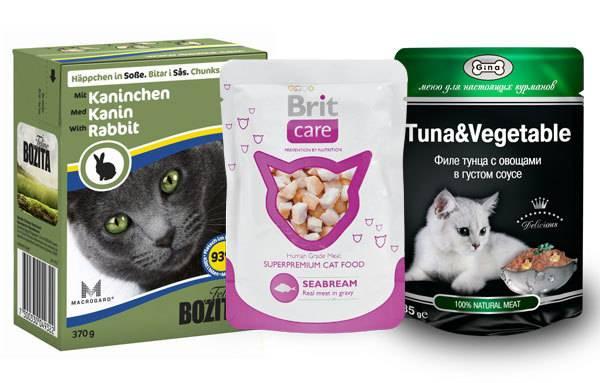 Обзор рейтинга лучших сухих кормов для котов (мнение ветеринаров)