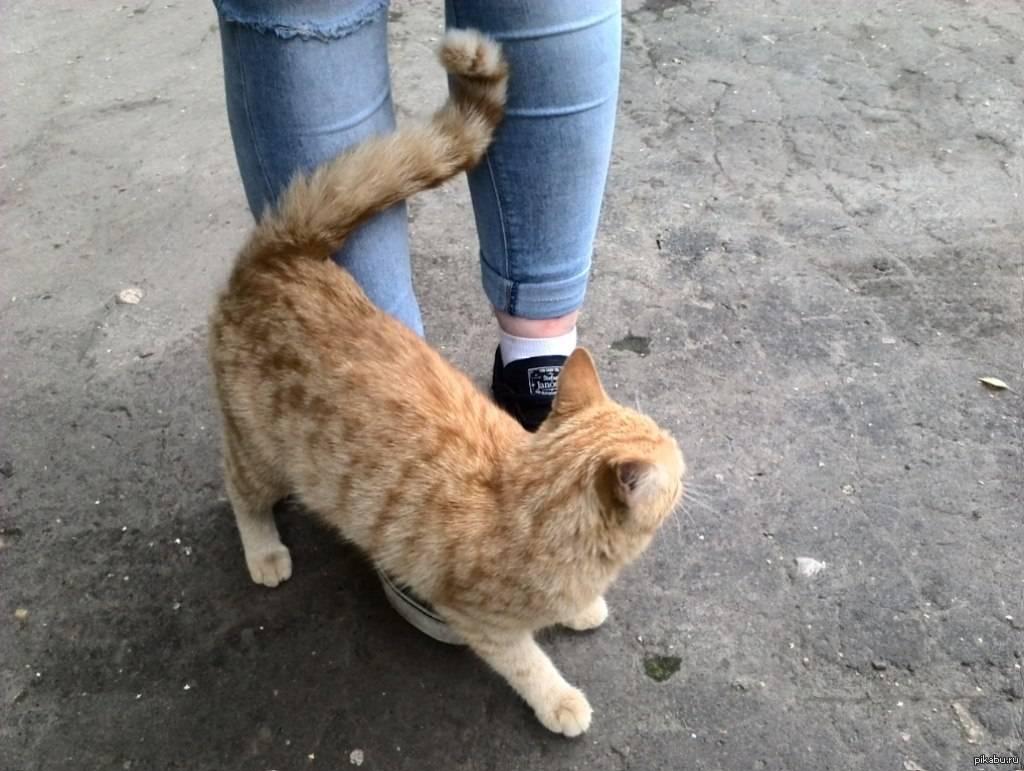 Почему кот ходит по пятам за хозяином? - gafki.ru