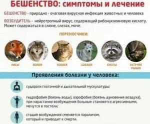 Симптомы бешенства у кошек: основные способы выявления недуга