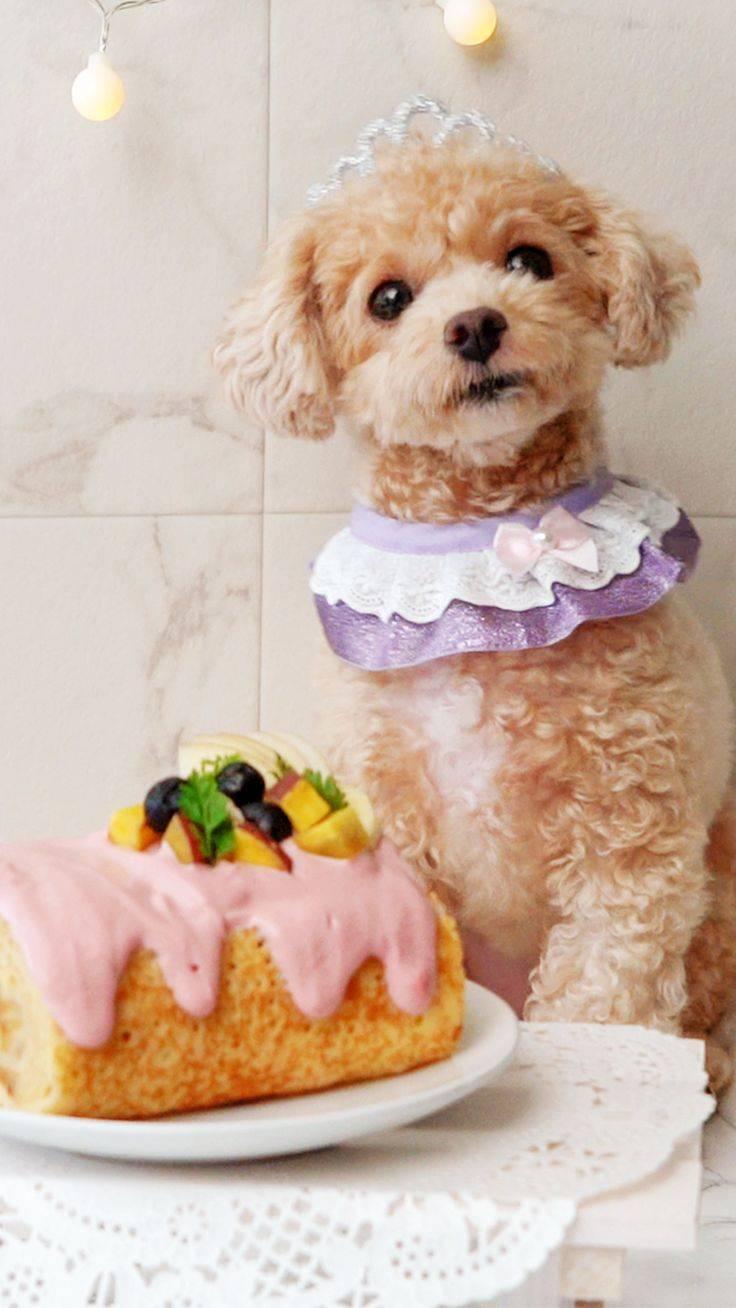 Печенье для собак своими руками: рецепты