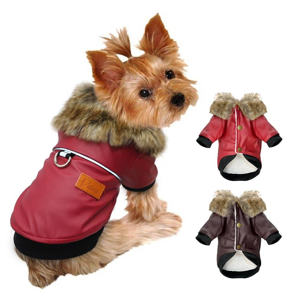 Выбираем одежду для маленьких собачек   сайт о маленьких собачках и не только