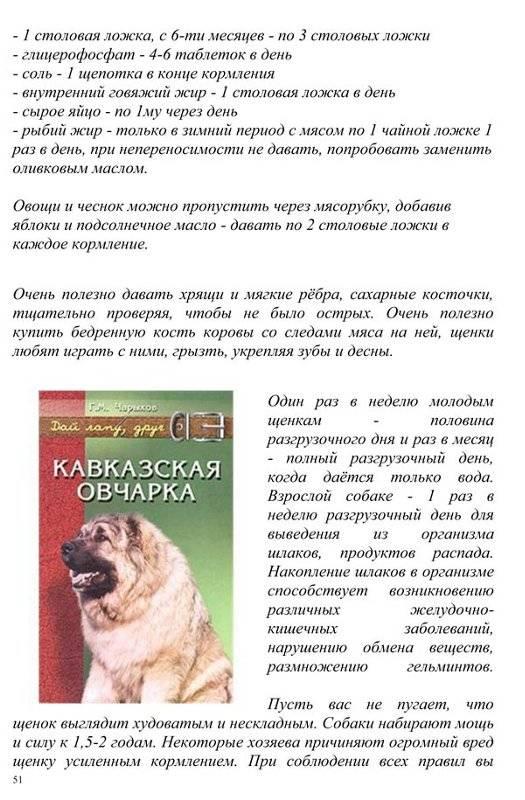 Чем кормить щенка алабая в 1, 2, 3, 4 месяца: меню