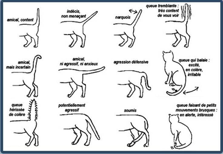 Какую информацию хочет донести до вас кот виляя хвостом?