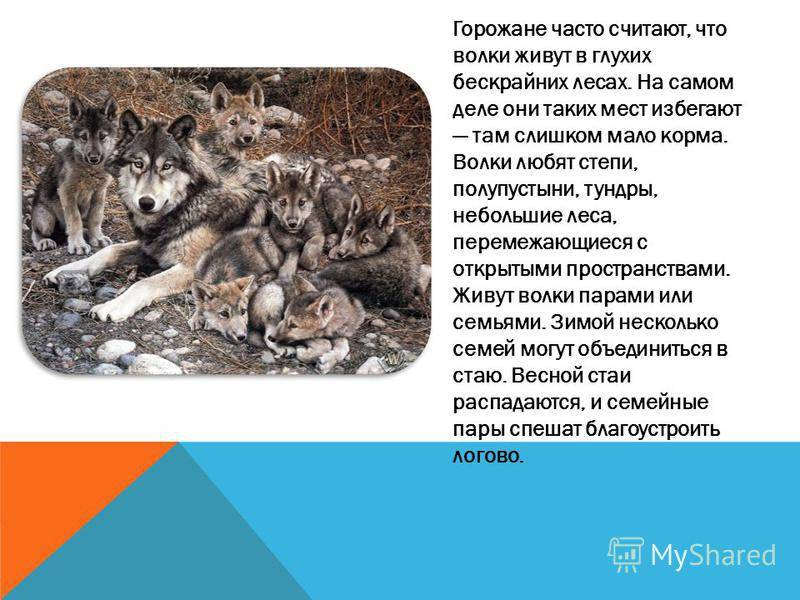 Как отличить волка от собаки