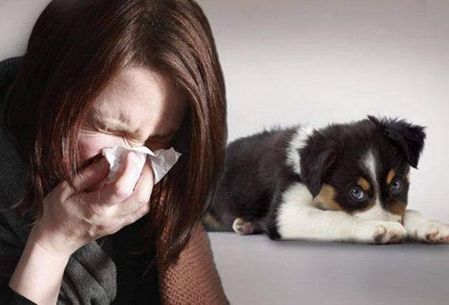 Гипоаллергенные собаки: список пород