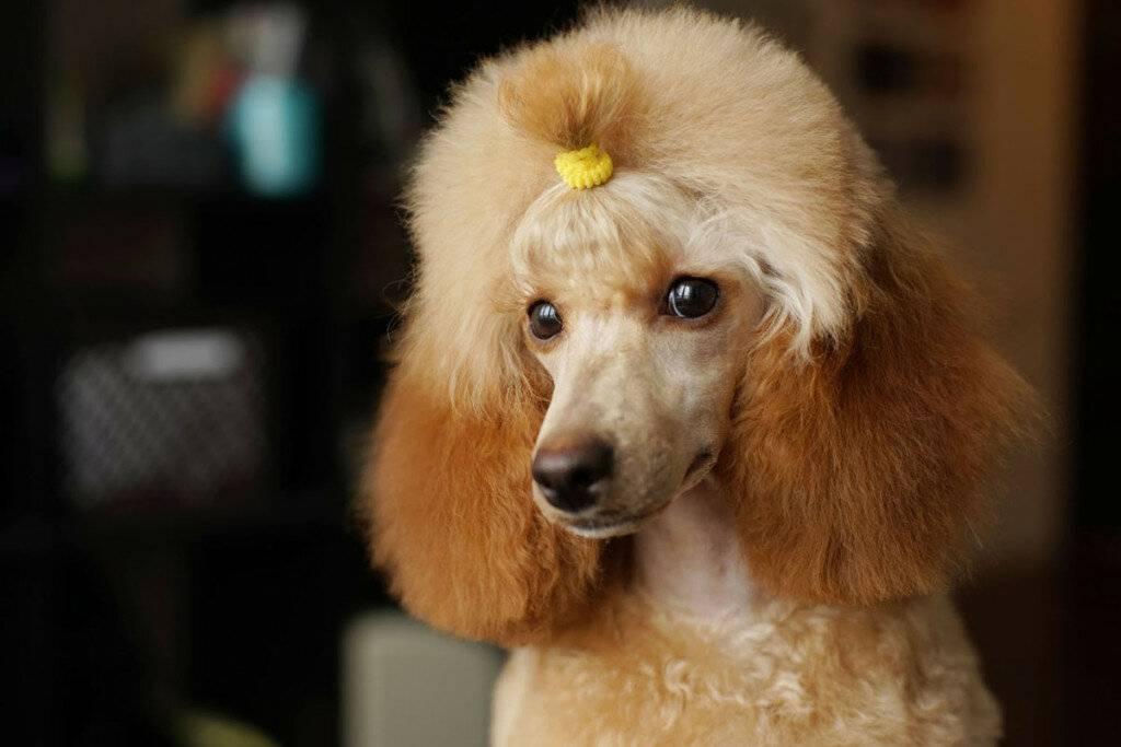 Лучшие породы собак для путешествий хоть на край света | pets2.me | яндекс дзен