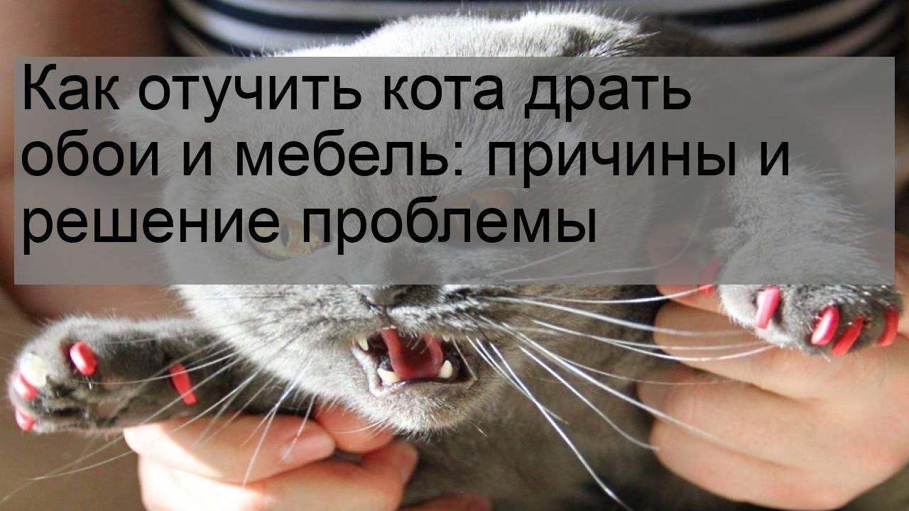 Как отучить кота драть обои и царапать мебель: безотказные способы