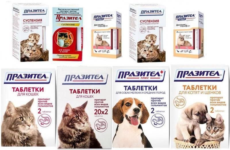 Празител таблетки для кошек: состав и назначение, инструкция по применению, побочные действия