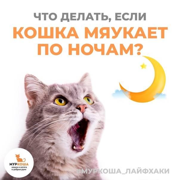 Что делать если котенок мяукает постоянно? несколько причин