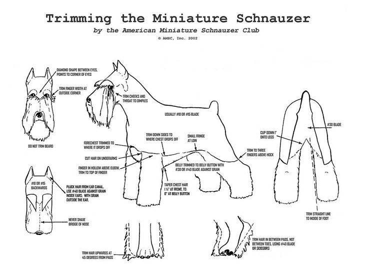 Тримминг собак или щенков: каким породам нужна процедура, зачем и как тримминговать собаку, мероприятие в груминг-салоне или дома.