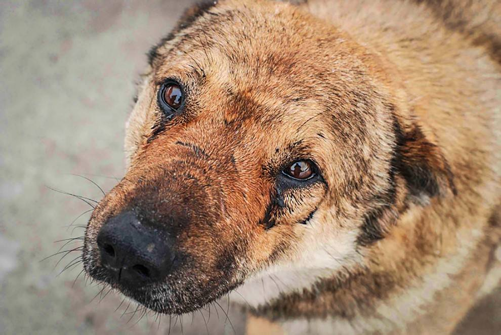 Собака плачет: умеют ли питомцы плакать и что делать хозяину