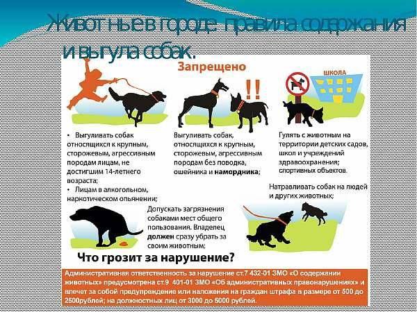 Что делать, если соседи выгуливают собак на газоне у дома: правила выгула собак по новому закону. — вопросы от читателей т—ж