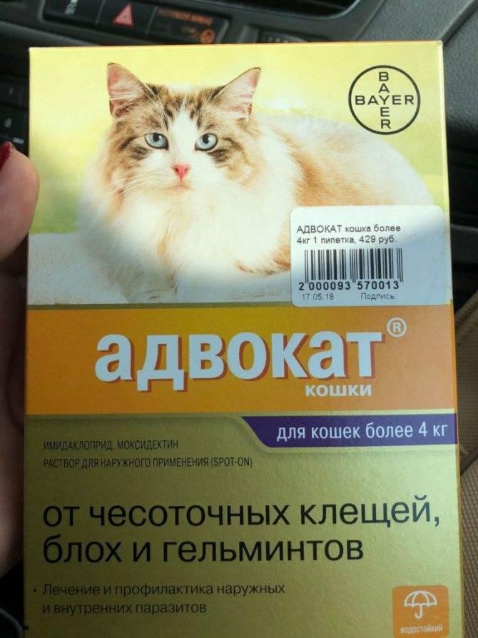 Как вывести у кошки глистов симтомы виды паразитов