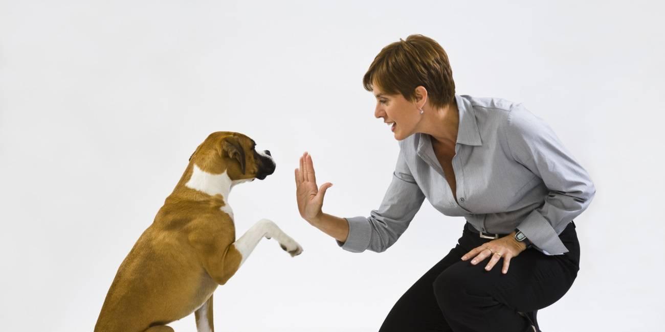 Как отучить собаку прыгать на людей и хозяина ? ~ дрессировка и обучение собак и щенков. воспитание собаки и щенка