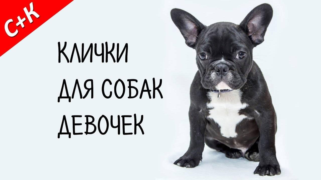 Клички для собак мальчиков: редкие и красивые имена