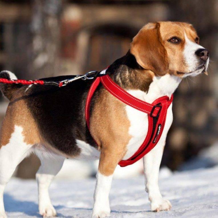 Шлейка для собак и щенков различных пород
