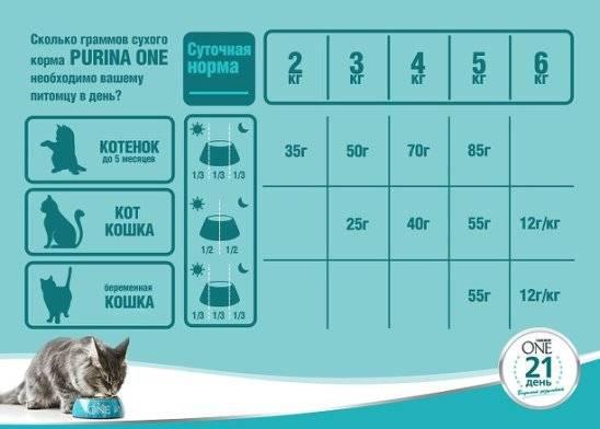 Сколько раз в день нужно кормить кошку и котенка