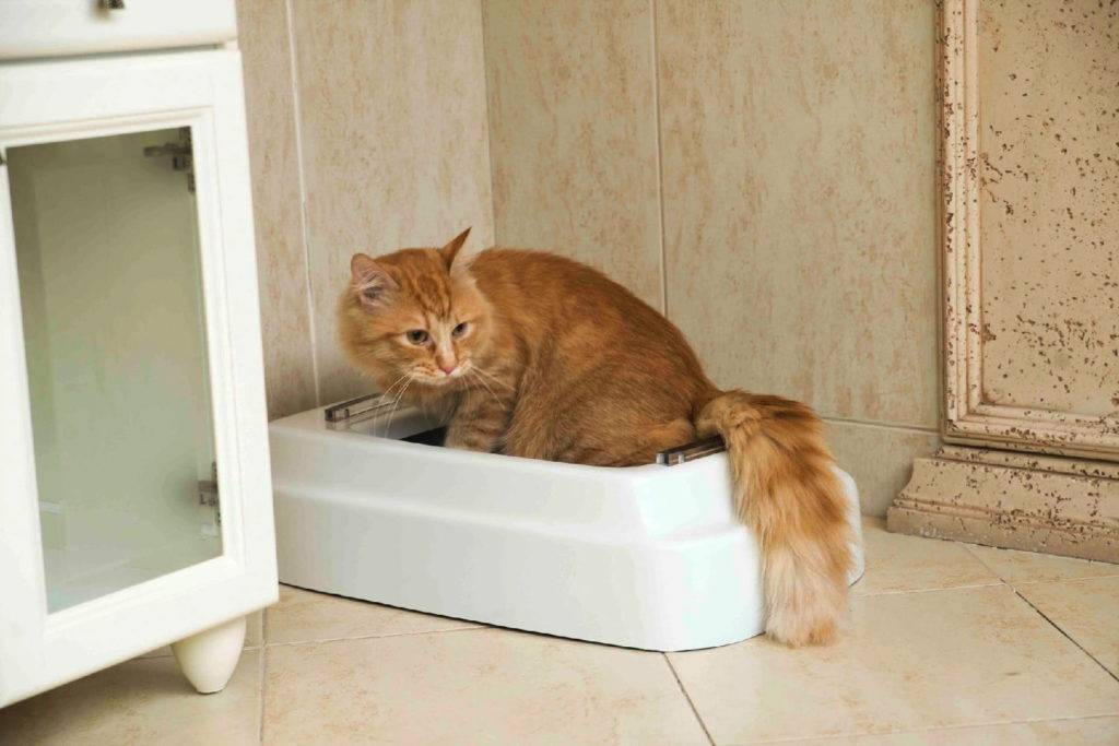 Как отучить кота или кошку гадить в неположенном месте и мимо лотка - действенные способы воспитания