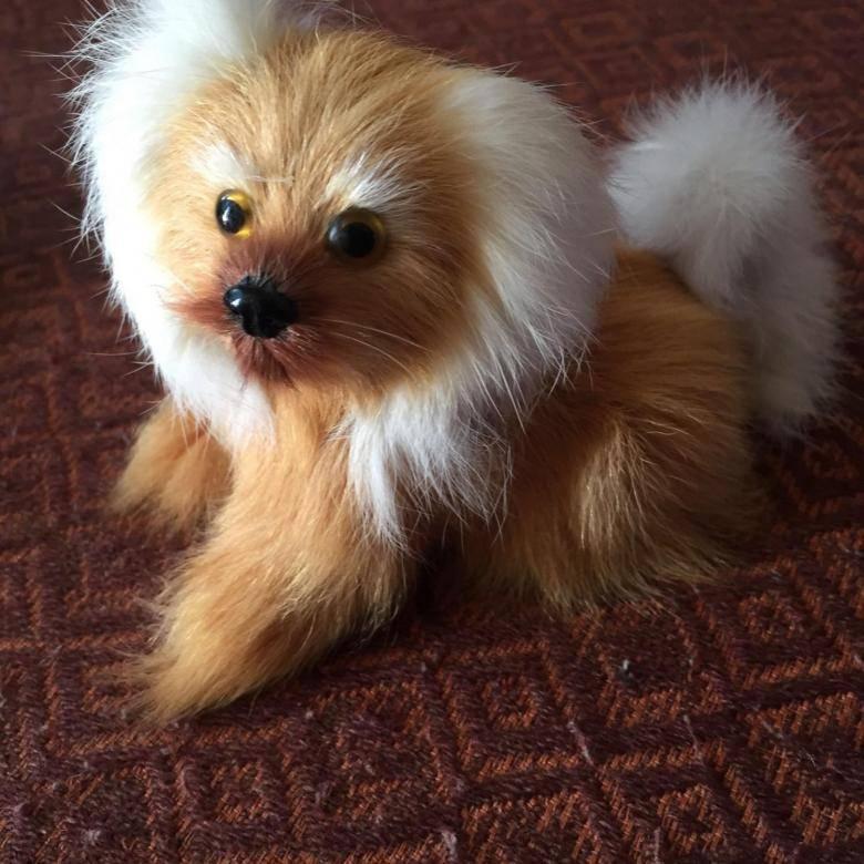 Топ-11 пород маленьких пушистых собак