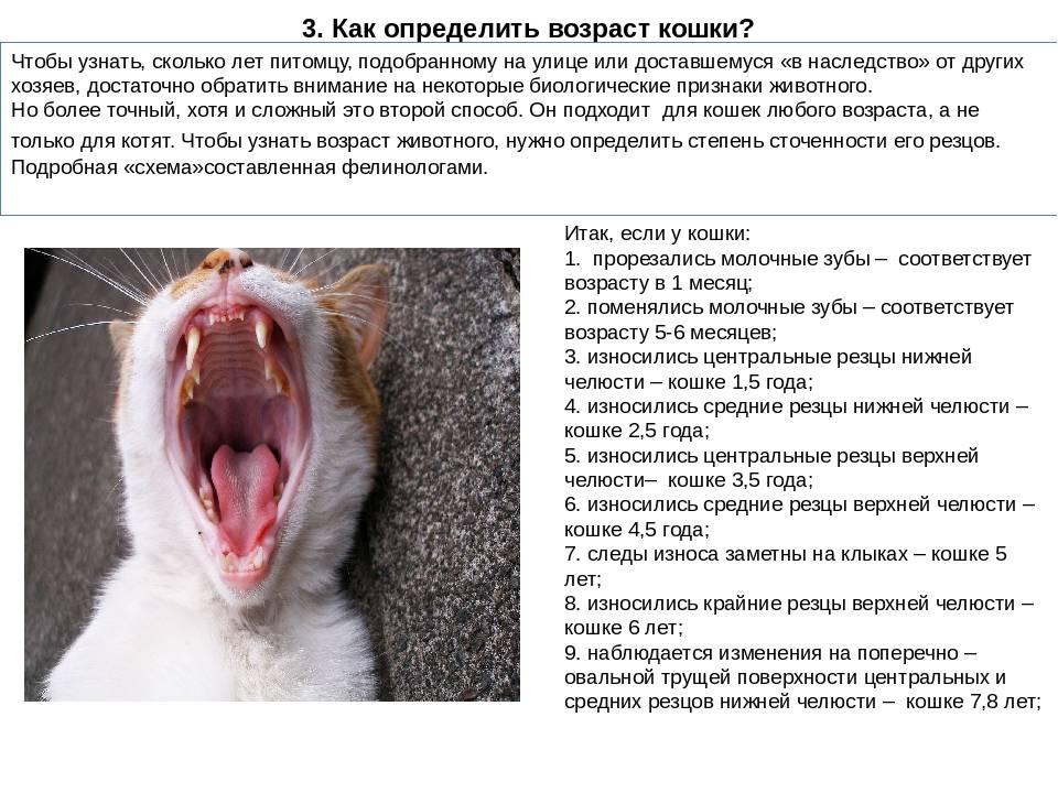 Как можно узнать или определить, сколько лет кошке; важные внешние факторы, говорящие о возрасте