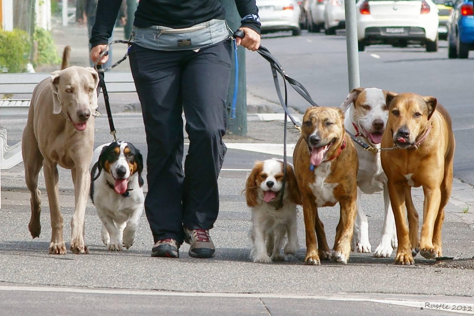 Где оставить собаку на время отъезда – или взять с собой?