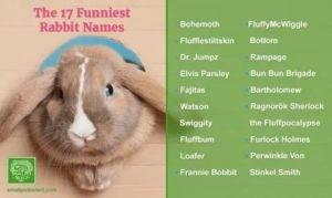 Как назвать декоративного кролика?
