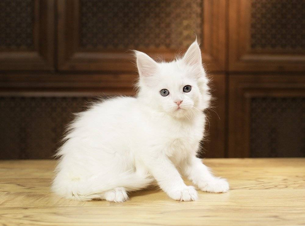 Клички для кошек девочек: редкие и красивые